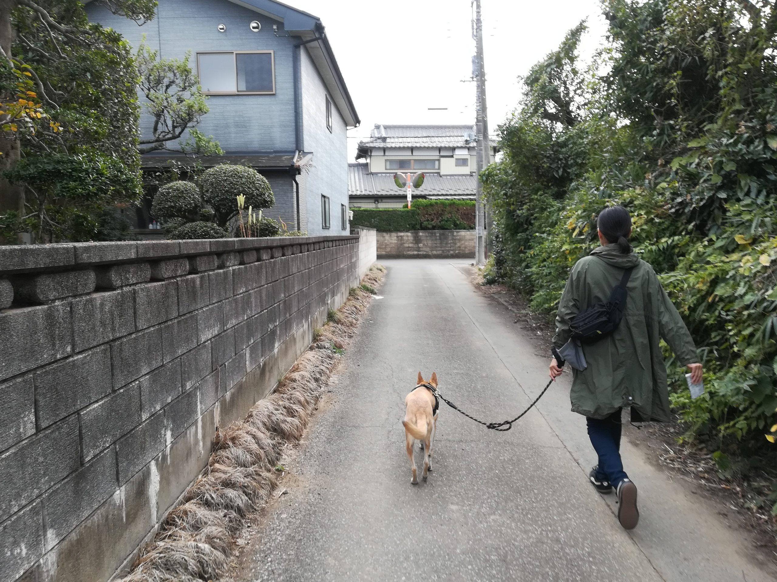 散歩中のアポロ