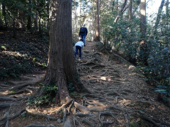 木の根がボコボコしている山道