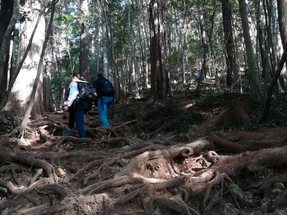 大中寺~太平山へ 木の根がたくさん出ている