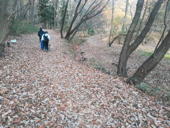 落ち葉で埋もれた山道