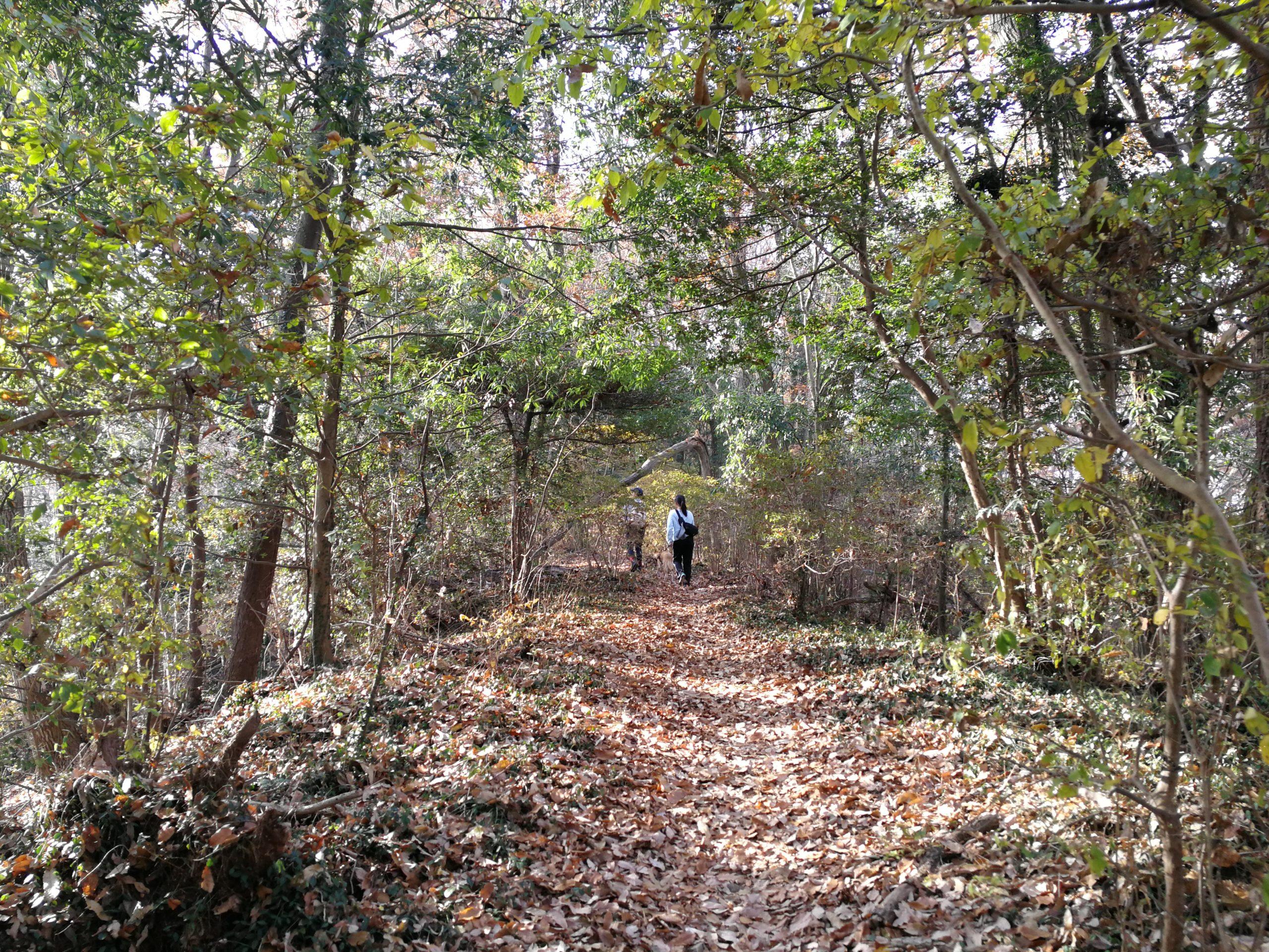 林の中を歩く