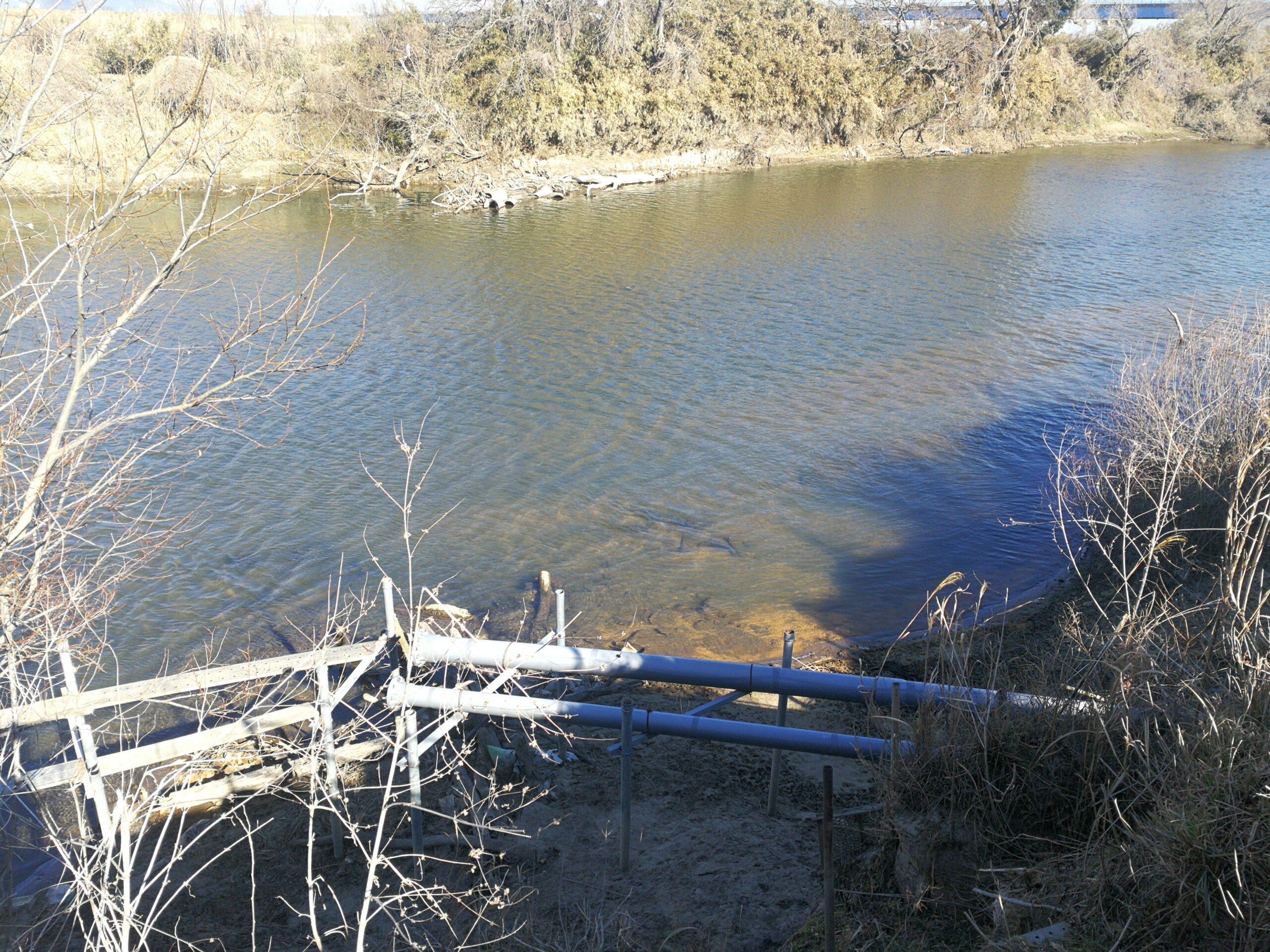 澄んでいてキレイな近所の川。