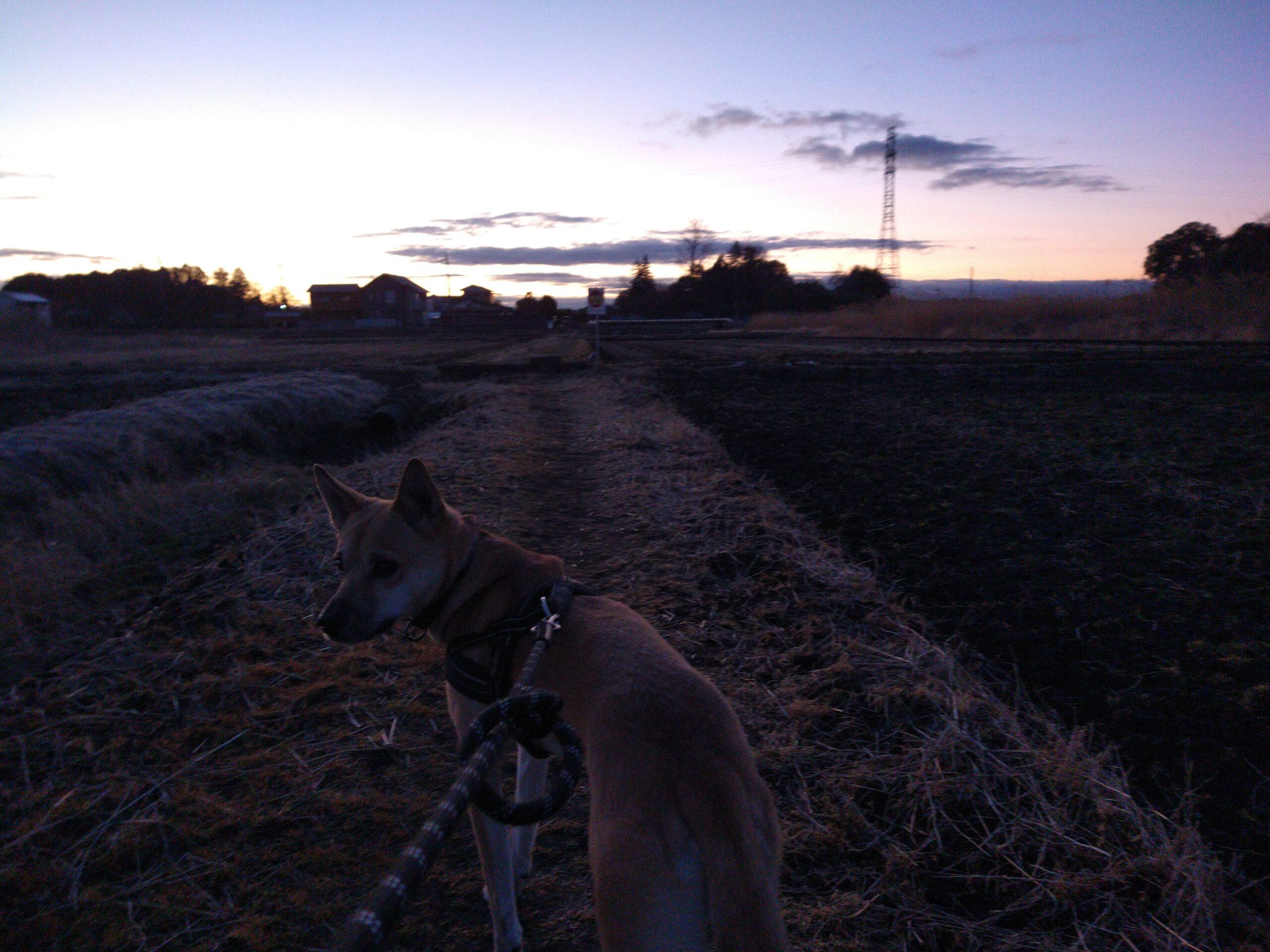 明け方の散歩